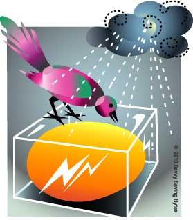 nestegg-birdguard-storm2