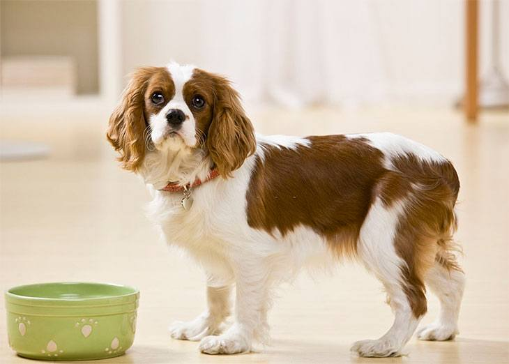 how to soften dog food kibble