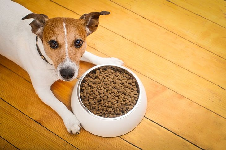 best dog food for maltipoo puppies