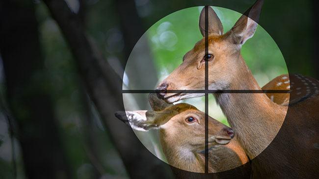 best inexpensive night vision scope